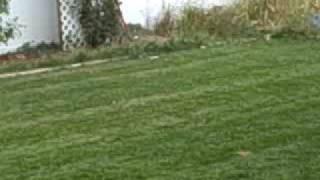 Roxie The Dog!!