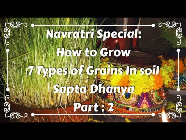 Navratri Special | How to Grow 7 Types of Grains in Soil | Part 2 | Wheat Grains | Sapta Dhanya