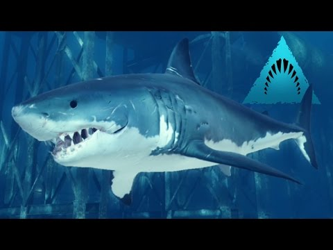 Great White Shark Wants To Feed! - Depth | Ep1 HD