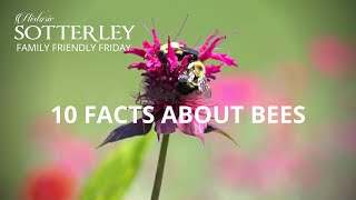 10 FACTS ABOUT BEES | FAMILY FRIENDLY FRIDAY