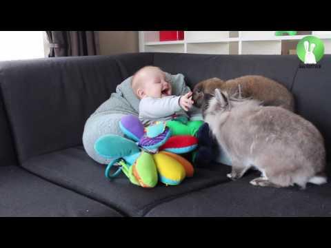 Rabbits make baby laugh