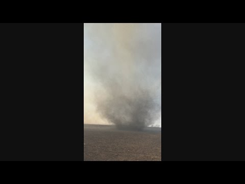 Huge Ashnadoes during a controlled burn