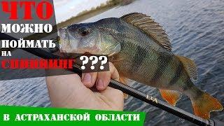 Рыбалка в Астрахани на спиннинг. Офигенно половил! Рыболовный дневник
