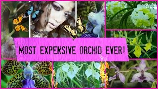 Most Expensive Orchid Purchase - RARE TREASURE