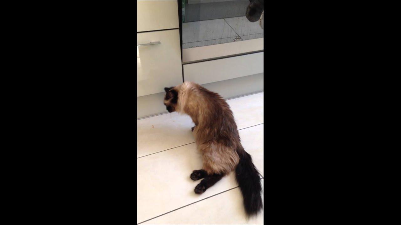 Перелом позвоночника у котов