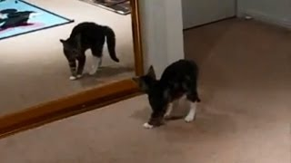 Кошки и зеркало. Подборка Топ 7