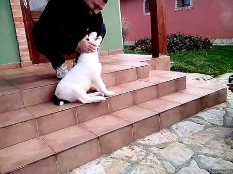 Azijati štenci