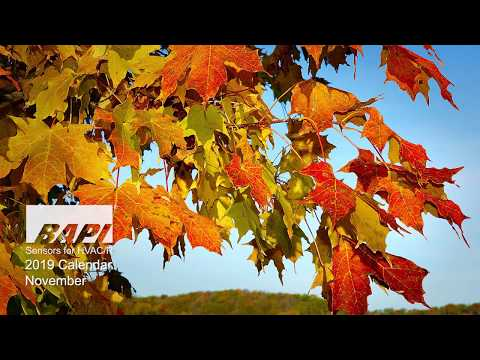 BAPI 2019 Calendar, November - The Fall Colors of Wisconsin