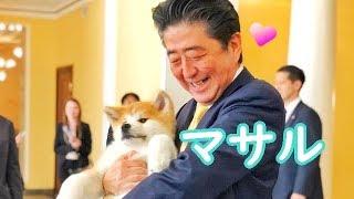 安倍総理 ザギトワ選手へ 秋田犬マサル贈呈 チャンネル登録お願いします...