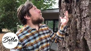 Daniel Bryan's Douglas fir tea tastes like Christmas!