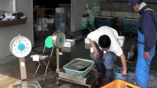 和歌山県新宮市三輪崎の遊漁船ワイルドキャット発釣り情報 http://www.w...