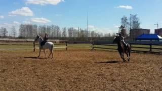 Верховая езда. Обучение и прогулки на лошадях