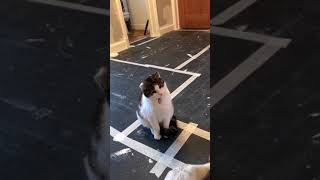 MUST WATCH! FUNNY CAT. Watching me paint