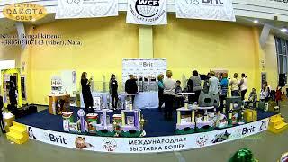 Выставка кошек, Харьков, 03032018, Best show, часть 2