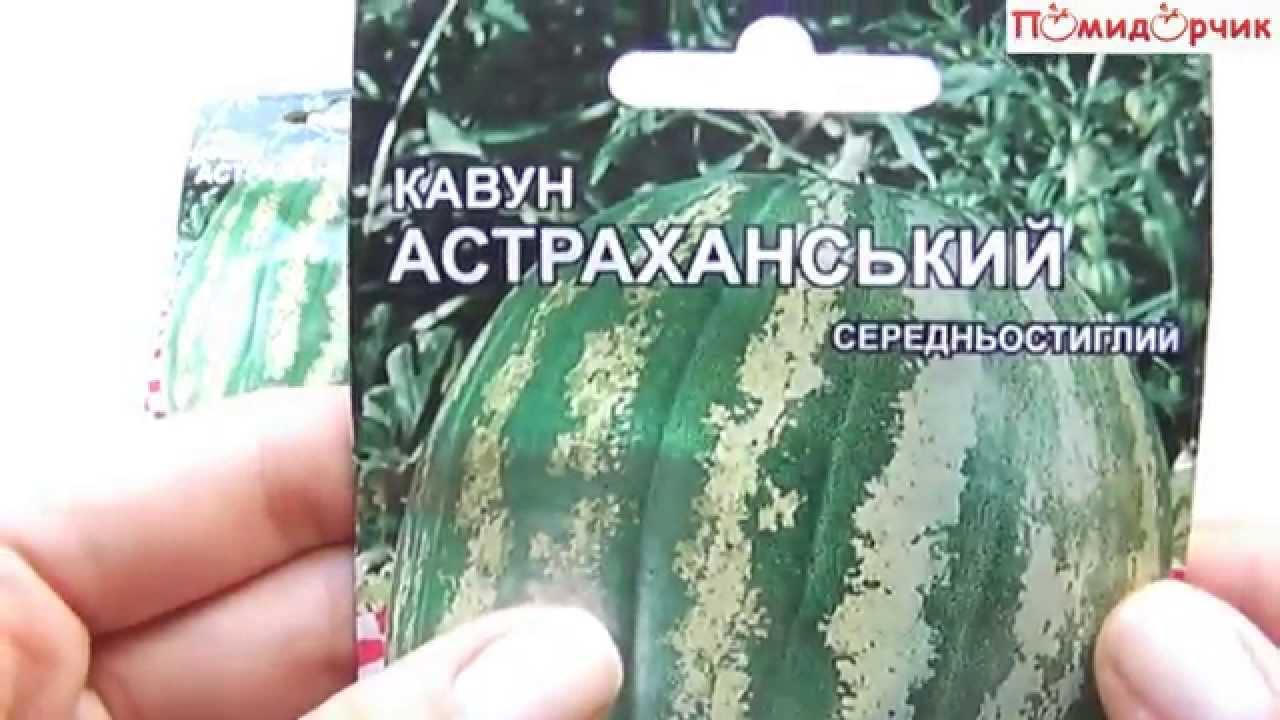 На астраханских полях собрали более 200 тысяч тон арбузов - YouTube