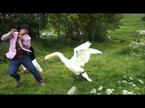 Download When Birds Attack