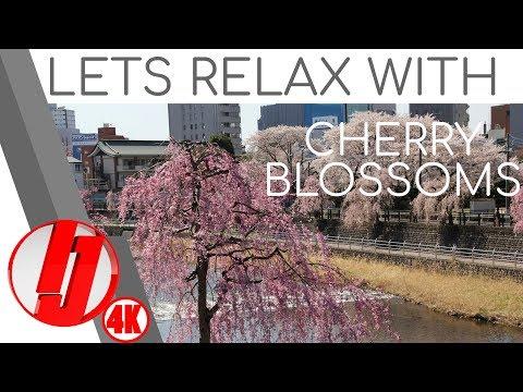 Cherry Blossom Festival - Live Stream at Hachimanyama Park/ Utsunomiya Tower