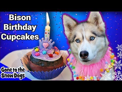 Bison Birthday Cupcakes for Dogs | Meat Birthday Cake For Dogs | DIY Dog Treats Recipe 106
