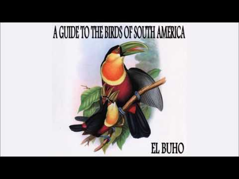 "El Búho • ""A Guide to the Birds of South America"" EP (Rhythm & Roots, 2012)"