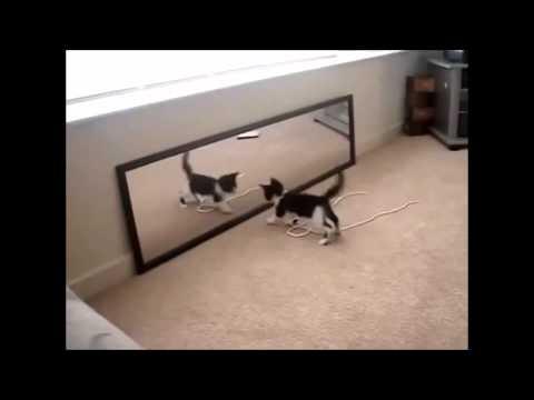 Kedinin Ayna İle İmtihanı