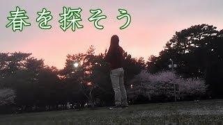 日本人なら年に一度は桜を拝みたいだろう? 去年はそうでもなかったけど...