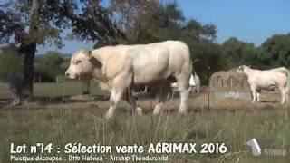 Lot 14 Sélection vente AGRIMAX 2016 by Simon Genetic