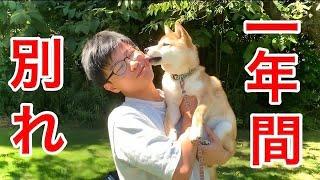 留学前に愛犬と感動の別れをしてきました