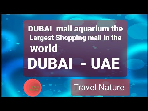 Dubai Mall Aquarium _The Largest Shopping mall in the world  – Dubai UAE