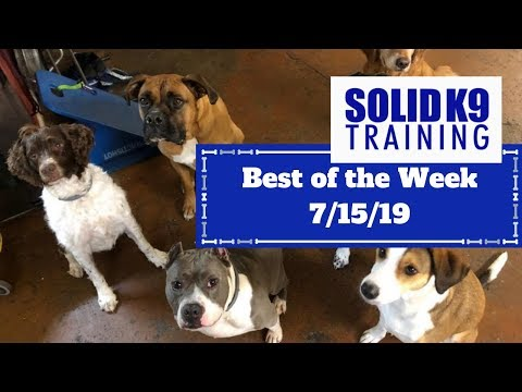 solid-k9-training-center-best-of-the-week-7/22/19