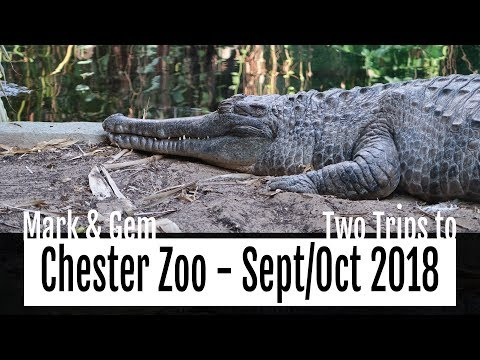 Two Trips to Chester Zoo - September & October 2018