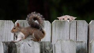 Süße Katzen Spielen mit Eichhörnchen - Katzen und Eichhörnchen sind Freunde.