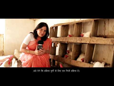 A People For Animals Film On Cruelty To Egg-laying Hens In Battery Cages