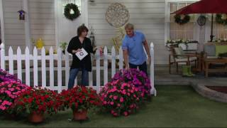 Cottage Farms 6 Piece Color Jubilee Sunpatiens - 24H News