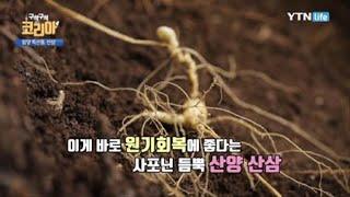 지리산 산삼밭 / YTN 라이프