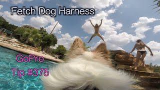 GoPro Fetch Dog Harness - GoPro Tip #375