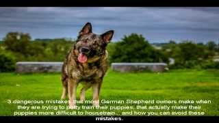 How To Potty Train A German Shepherd Puppy Way