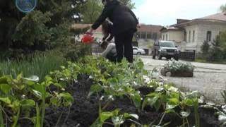 Высадка цветов в администрации(Более двух тысяч цветов высадили сотрудники районной администрации возле своего места работы. Создание..., 2014-06-09T07:19:16.000Z)