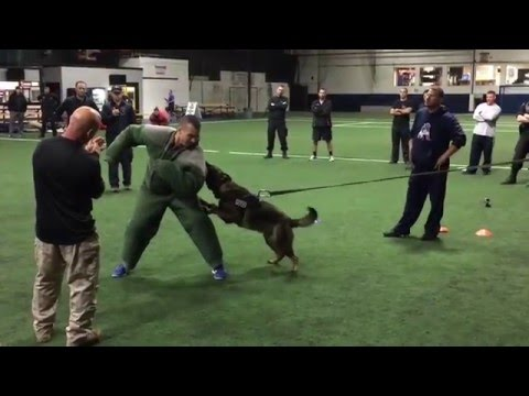 Chicopee Mass Police K9 training video