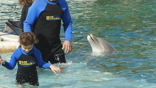 La verdad detrás del nado con delfines