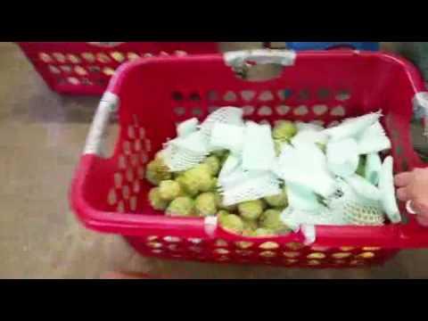 Vietnamese Tropical Fruit Homestead, Florida