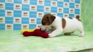 「きくちペット」かわいい仔犬仔猫の専門店です。神奈川に3店舗のネット...