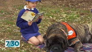 Meet Baron, the story dog helping school kids to read | 7.30