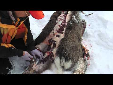Deer hunting knives #150 / Gunny Hunter & Fox River Elmax