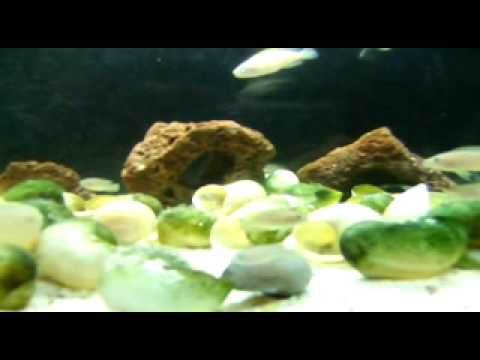 feng shui area planted aquarium and tanganyika aquarium youtube. Black Bedroom Furniture Sets. Home Design Ideas