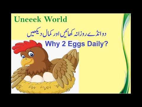 Egg Benefits - Eat 2 eggs daily
