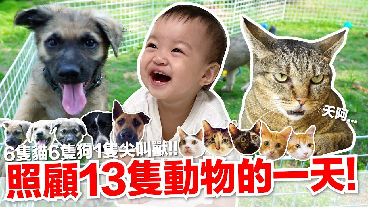 【好味小姐】照顧13隻動物的一天!|好味貓日常EP108