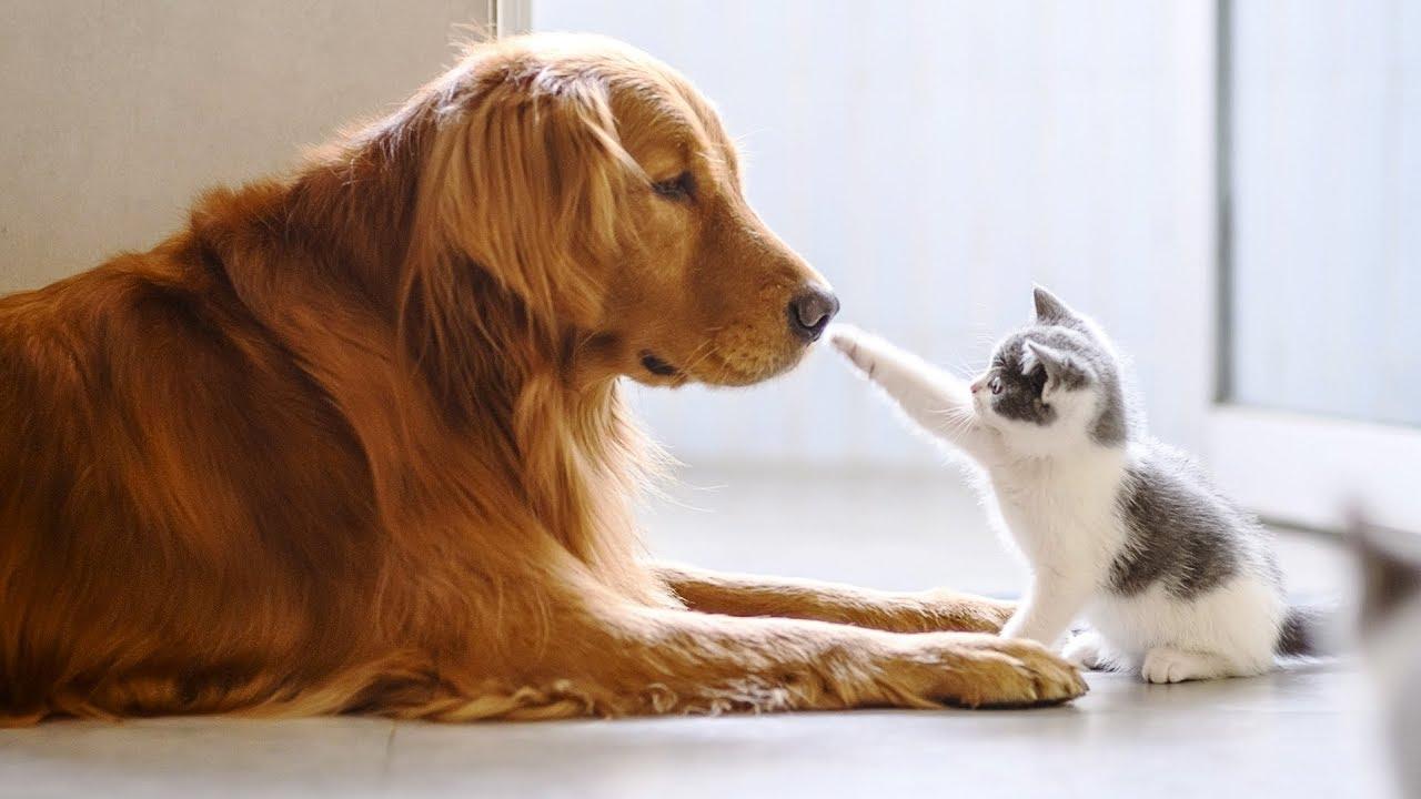 15 пород собак, которые лучше уживаются с кошками