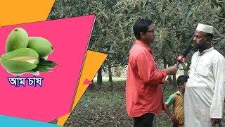 আম চাষ I Banglar Krishi Kotha I বাংলার কৃষি কথা -আম্রপলি আম চাষে বিপ্লব/মেহেরপুর জেলা