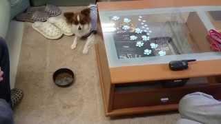 静岡県浜松市で犬のしつけ教室をしているペットのブリーダーワンブーで...