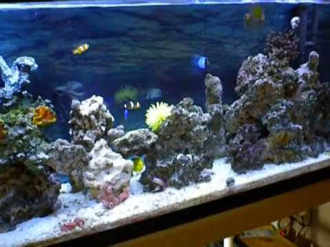 ultra clear saltwater marine aquarium with home made filter april